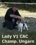 Jack Russell Ungarischer Champion Untouchable Lady